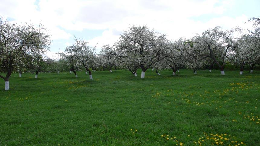 Сад біля музею Рильського, с. Романівка