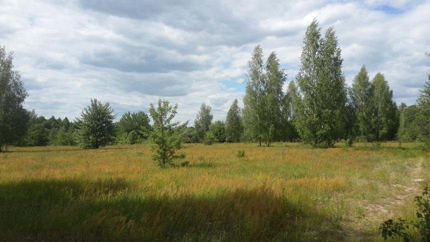 Лісок, Ічнянський НПП